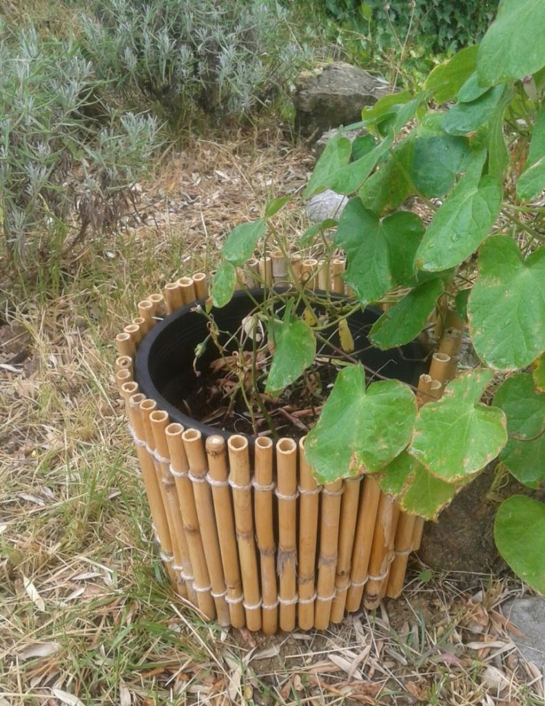 pot with canes and twine